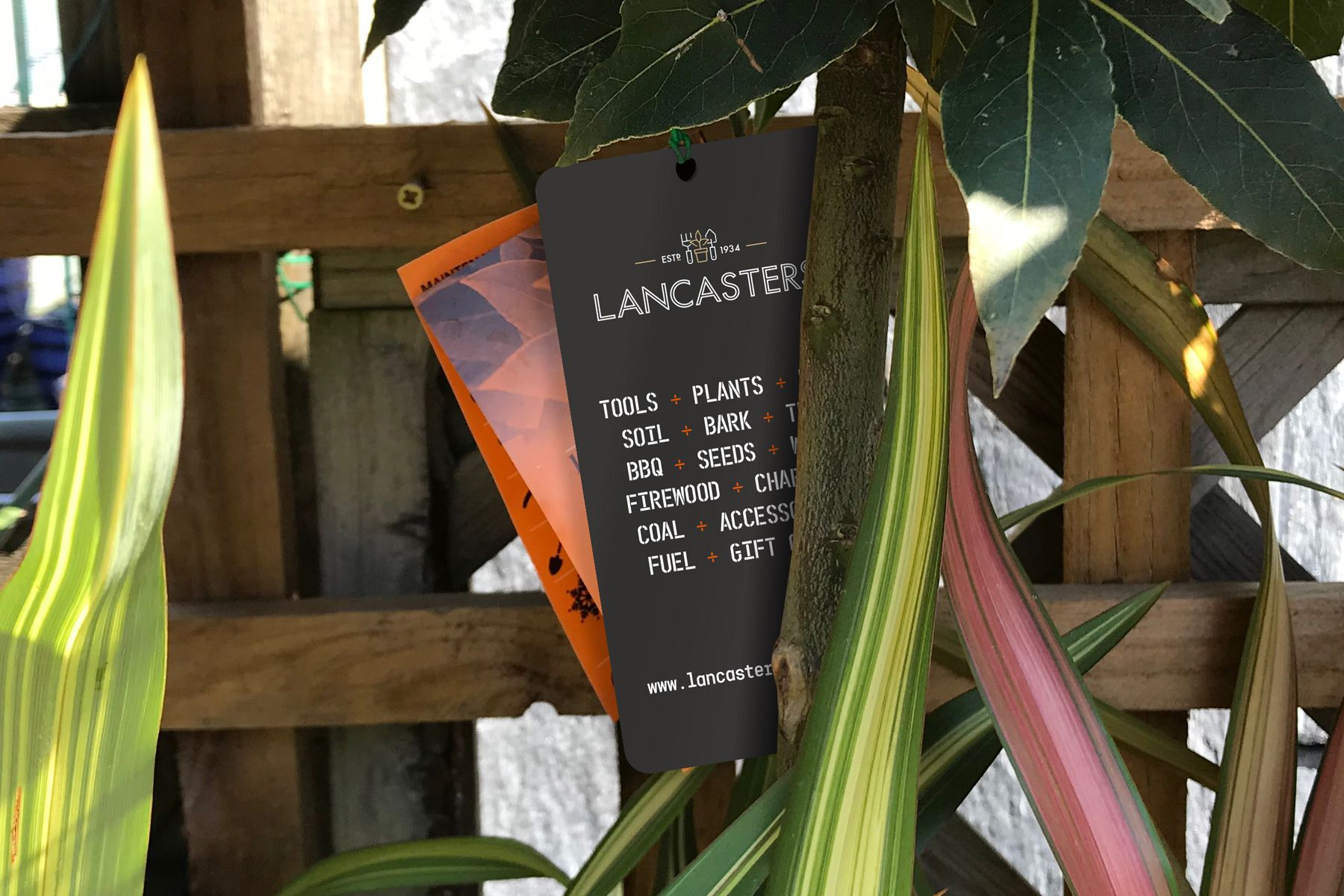 Lancasters_labelonplant_small